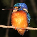 Kingfisher photo biz name feat